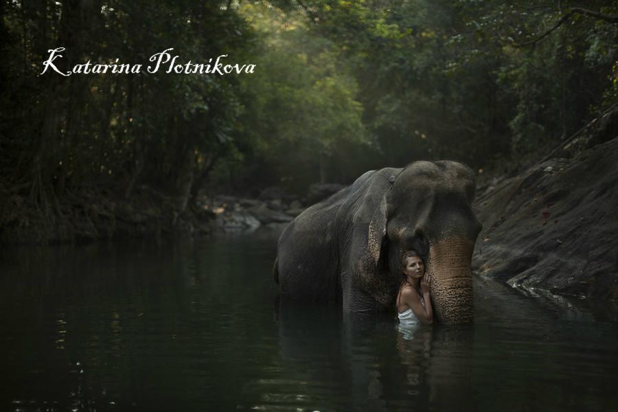 elephantPlotnikova
